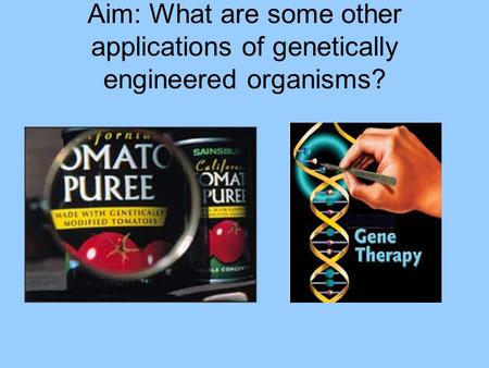 Aim: What are some other applications of genetically engineered organisms?