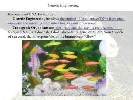 Recombinant DNA Technology: Genetic Engineering involves____________________________________ __________________________________________________ Transgenic.