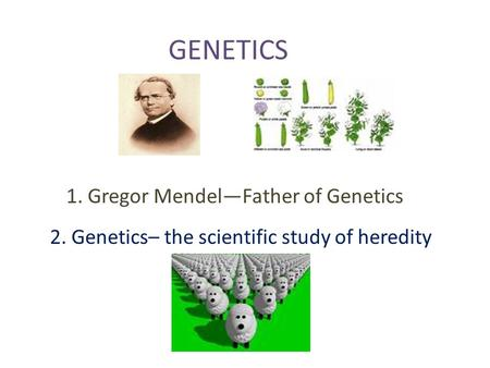 GENETICS 1. Gregor Mendel—Father of Genetics 2. Genetics– the scientific study of heredity.