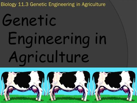 11/7/2009 Biology 11.3 Genetic Engineering in Agriculture Genetic Engineering in Agriculture.