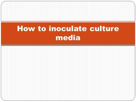 "How to inoculate culture media. Inoculation From Latin word ""Inoculare"" which means to implant or to introduce. It means to implant or introduce microorganisms."