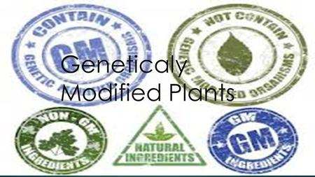 Geneticaly Modified Plants. Which one ? Beneficial?Risky ? Unintended Harm To Other Organism Reduce Effectiveness Of Pesticides Allergenicity Gene transfer.
