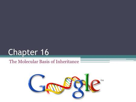 Chapter 16 The Molecular Basis of Inheritance Scientific History The march to understanding that DNA is the genetic material ▫Frederick Griffith (1928)