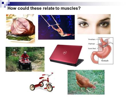 How could these relate to muscles?