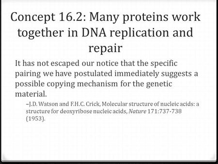 Concept 16.2: Many proteins work together in DNA replication and repair It has not escaped our notice that the specific pairing we have postulated immediately.