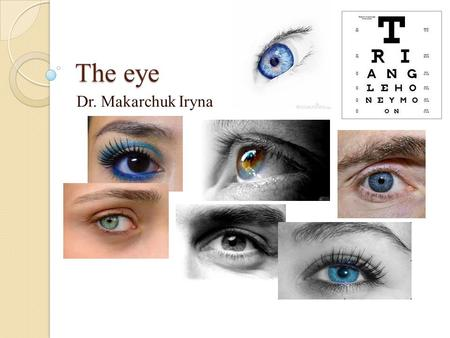 The eye Dr. Makarchuk Iryna. The eye is a complex sensory organ that provides the sense of sight. In many ways, the eye is similar to a digital camera.
