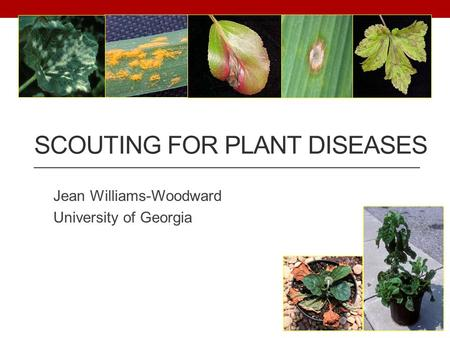 SCOUTING FOR PLANT DISEASES Jean Williams-Woodward University of Georgia.