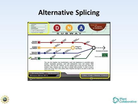Alternative Splicing. mRNA Splicing During RNA processing internal segments are removed from the transcript and the remaining segments spliced together.