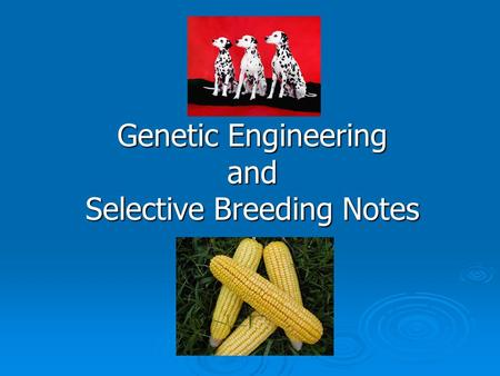 Genetic Engineering and Selective Breeding Notes