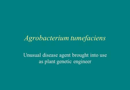 Agrobacterium tumefaciens Unusual disease agent brought into use as plant genetic engineer.