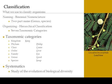 Www.BioEdOnline.org Leucaena leucocephala Lead tree Classification What we use to classify organisms Naming - Binomial Nomenclature Two part name (Genus,