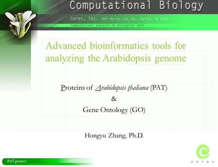 PAT project Advanced bioinformatics tools for analyzing the Arabidopsis genome Proteins of Arabidopsis thaliana (PAT) & Gene Ontology (GO) Hongyu Zhang,