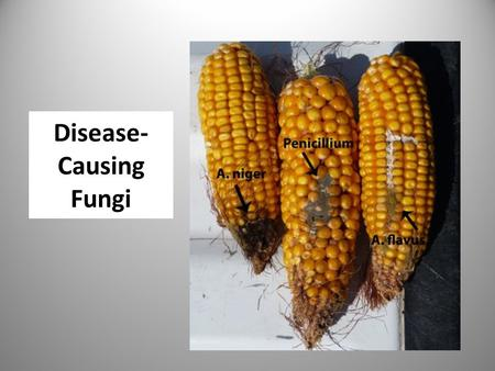 Disease- Causing Fungi. Discuss three diseases you know something about. What are the effects of these diseases?