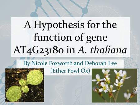A Hypothesis for the function of gene AT4G23180 in A. thaliana By Nicole Foxworth and Deborah Lee (Ether Fowl Ox)