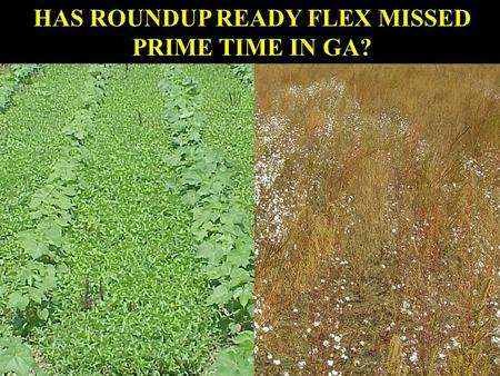 HAS ROUNDUP READY FLEX MISSED PRIME TIME IN GA?. planting harvest 4 leafLayby60% open bolls Roundup Ready ® Flex Cotton In-season; emergence to 60% open.