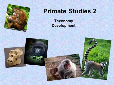 Primate Studies 2 Taxonomy Development.
