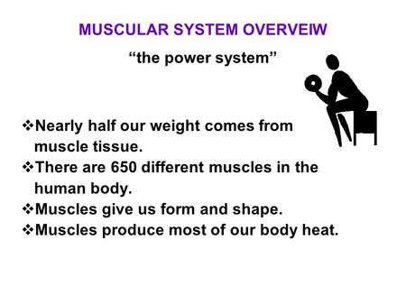 "MUSCULAR SYSTEM OVERVEIW ""the power system"""
