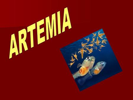 The use of Artemia nauplii as live food for the rearing of fish and crustacean larval stages, has been one of the most important steps in the development.