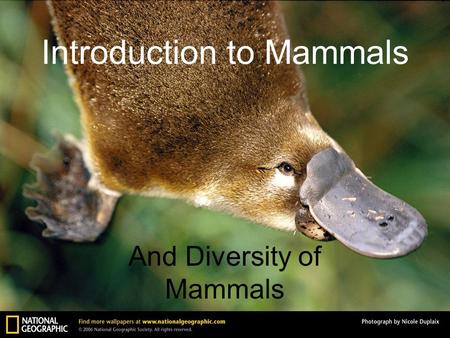 Introduction to Mammals And Diversity of Mammals.