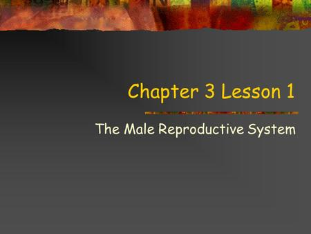 Chapter 3 Lesson 1 The Male Reproductive System You'll learn to… Analyze the relationship between good personal hygiene, health promotion, and disease.