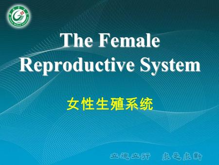 The Female Reproductive System 女性生殖系统