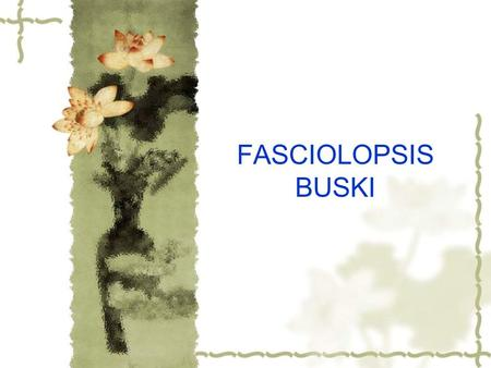 FASCIOLOPSIS BUSKI. Fasciolopsis buski is known scientifically as the largest intestinal fluke in humans.Infection occurs primarily in Asia and the Indian.