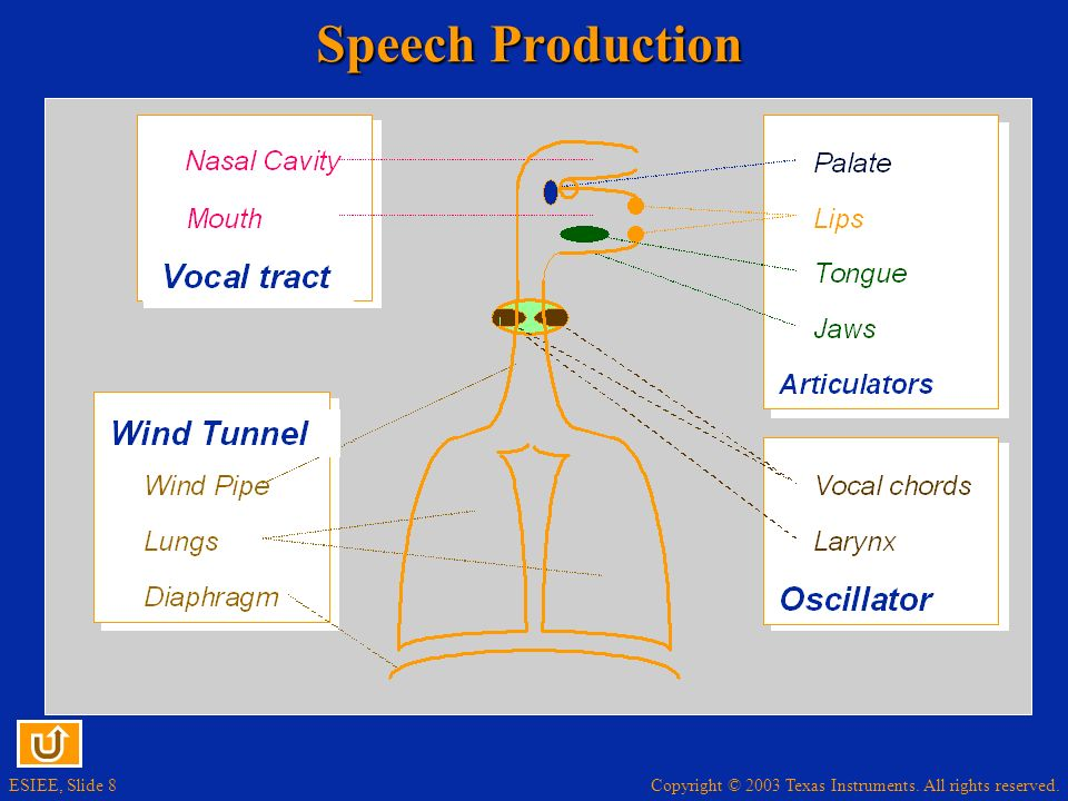 Copyright © 2003 Texas Instruments. All rights reserved. ESIEE, Slide 9 Speech Signal
