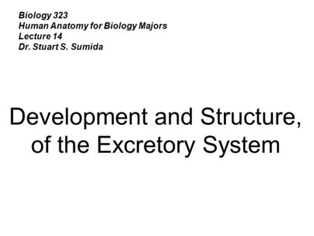 Development and Structure, of the Excretory System