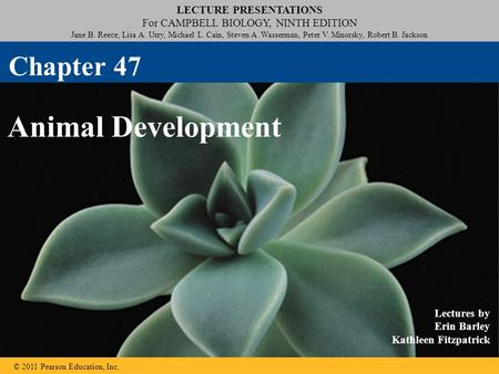LECTURE PRESENTATIONS For CAMPBELL BIOLOGY, NINTH EDITION Jane B. Reece, Lisa A. Urry, Michael L. Cain, Steven A. Wasserman, Peter V. Minorsky, Robert.