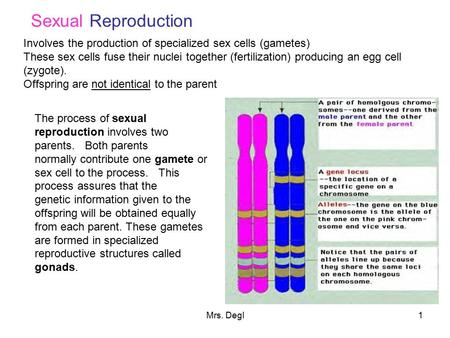 Sexual Reproduction Involves the production of specialized sex cells (gametes) These sex cells fuse their nuclei together (fertilization) producing an.