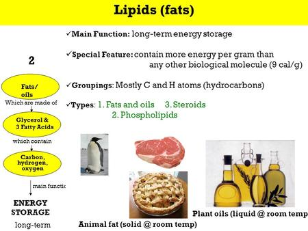 Which are made of which contain Which are made of which contain CarbohydratesFats/ oils Nucleic acids (e.g., DNA/RNA) Proteins Simple sugars (e.g., glucose)