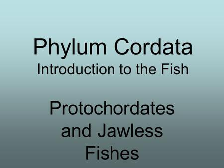 Phylum Cordata Introduction to the Fish