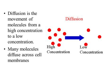 Diffusion is the movement of molecules from a high concentration to a low concentration. Many molecules diffuse across cell membranes.