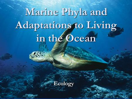 Marine Phyla and Adaptations to Living in the Ocean Ecology.