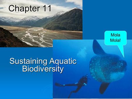 Chapter 11 Sustaining Aquatic Biodiversity Mola Mola!