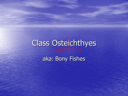 Class Osteichthyes aka: Bony Fishes. Body Shape Body shape is directly related to the niche of the fish Body shape is directly related to the niche.