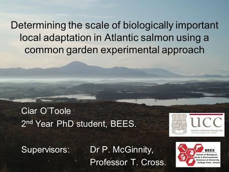 Determining the scale of biologically important local adaptation in Atlantic salmon using a common garden experimental approach Ciar O'Toole 2 nd Year.