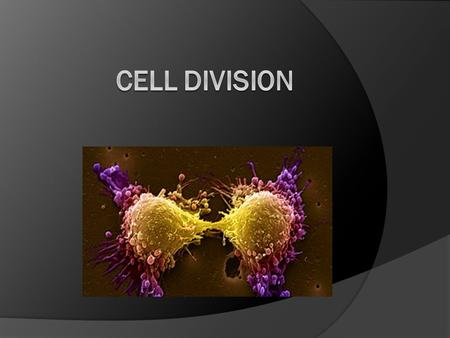 Why do cells Divide? For  Growth  Development  Repair  Reproduction Larger cells: - can miscommunication with DNA - have trouble processing information.