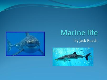 By Jack Roach. What is Marine life? Marine life is sea creatures that live and eat and make their homes. Some are old some have just been discovered,