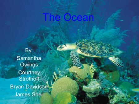 The Ocean By: Samantha Owings Courtney Strothoff Bryan Davidson James Shell.