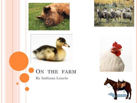 O N THE FARM By Indiana Laurie. A NIMALS ON A FARM Horse Cow Pig Sheep Dog Hen Cat Bull Duck Rabbit.