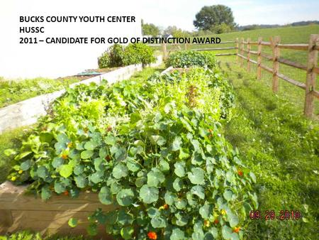 BUCKS COUNTY YOUTH CENTER HUSSC 2011 – CANDIDATE FOR GOLD OF DISTINCTION AWARD.