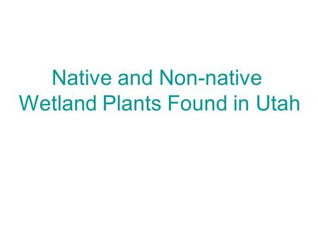 Native and Non-native Wetland Plants Found in Utah.