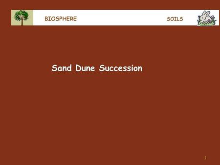 1 BIOSPHERE SOILS Sand Dune Succession. 2 BIOSPHERE SUCCESSION In a plant-free environment, like after a landslide, eruption, tsunami or on a beach or.