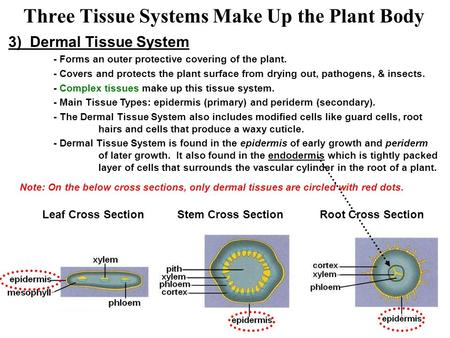 Three Tissue Systems Make Up the Plant Body
