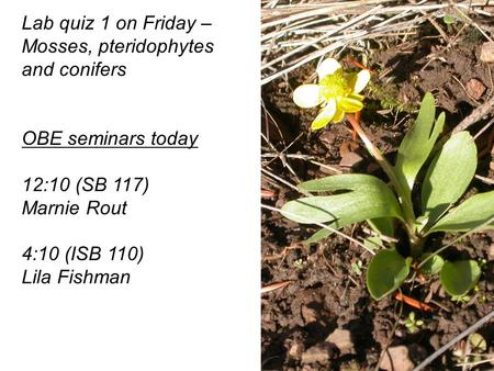 Lab quiz 1 on Friday – Mosses, pteridophytes and conifers OBE seminars today 12:10 (SB 117) Marnie Rout 4:10 (ISB 110) Lila Fishman.