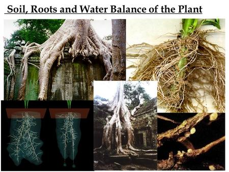 Soil, Roots and Water Balance of the Plant Soil Profile – aka Soil Layers.