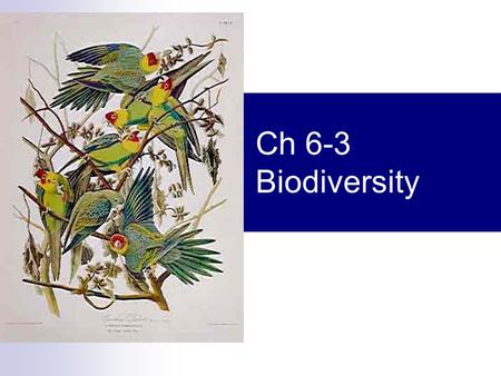 Ch 6-3 Biodiversity. Biodiversity  Biological diversity  Sum total of the genetically based variety of all organisms in the biosphere  SIMPLE TERMS.