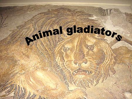 Who fought against the animals How the animals were imported How the animal gladiators were armed When the colsseum was built Why it was built How they.