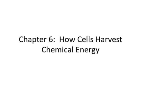 Chapter 6: How Cells Harvest Chemical Energy. Muscle Fibers Fast-twitch Performs best for sprints Contract quickly but tire quickly Make ATP anaerobically.